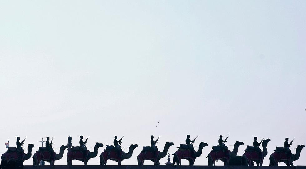 Camellos en formación