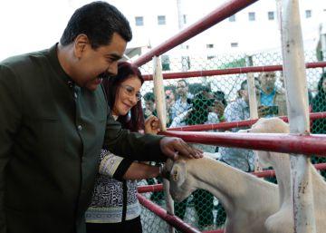Un vídeo que muestra a Maduro hablando a unas vacas levanta polémica
