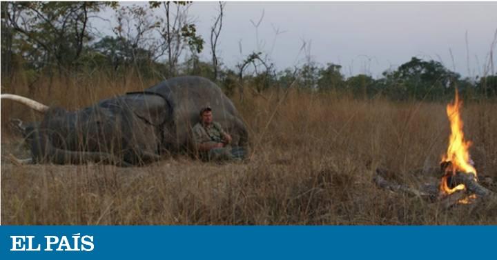 Resultado de imagem para caçador A vítima é o sul-africano Theunis Botha