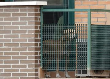 El Tribunal Superior de Madrid deniega indemnizar a Teresa Romero por el sacrificio de su perro