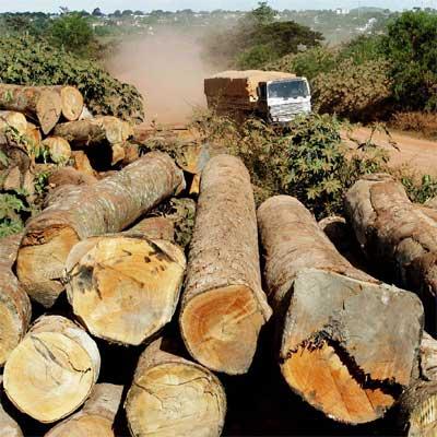 la deforestacion del amazonas,quien la para?