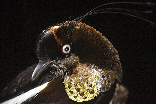 nueva especie 8