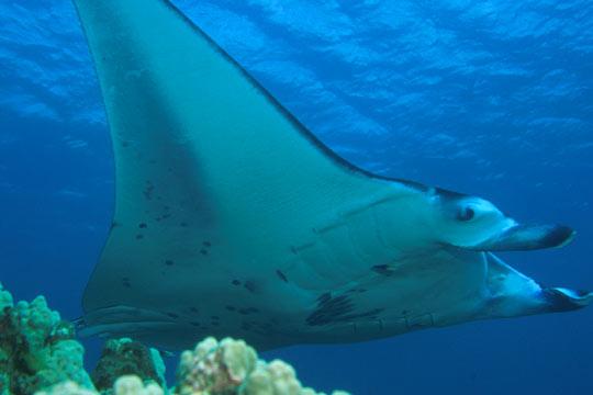 Animales en Peligro de Extincion y los qe ya se extinguieron