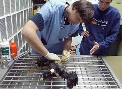 Un veterinario de 'El Refugio' atiende a 'Nena'