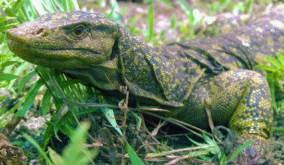 http://www.elpais.com/recorte/20100407elpepusoc_1/LCO340/Ies/nuevo_lagarto.jpg