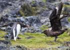 La mitad de la fauna salvaje ha desaparecido en 40 años