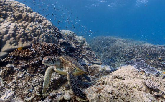 El fondo del mar, con Google Maps