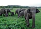 Drones y Google Earth combaten la caza ilegal de elefantes