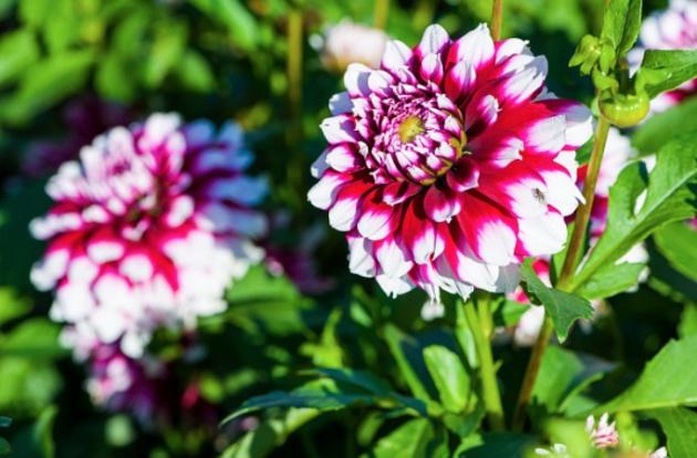 Llega la primavera reconoces estas flores verne el pa s - Plantas para jardin japones ...