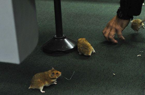 Resultado de imagem para sobre homens e ratos