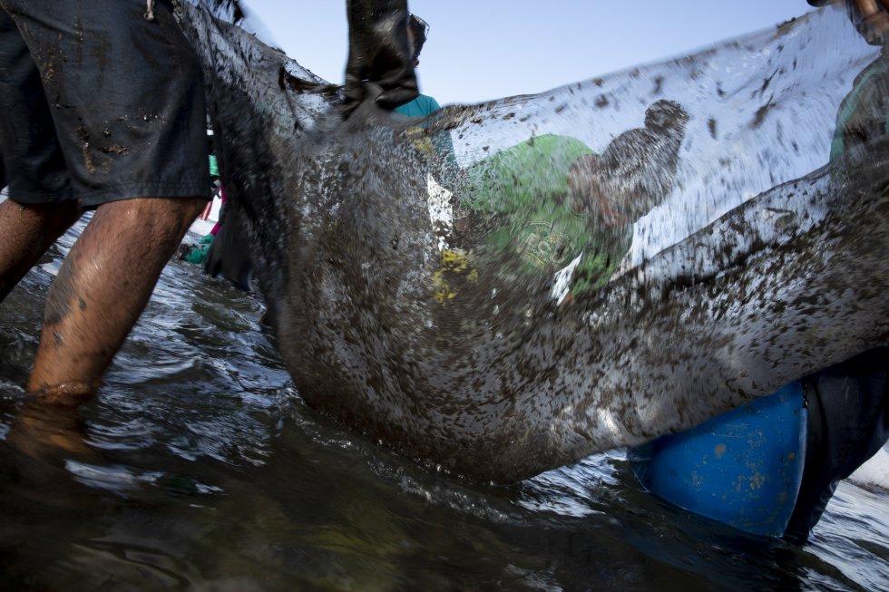 Na praia de Muro Alto, Ipojuca, Pernambuco, voluntários usam rede para recolher troços de óleo cru das águas.
