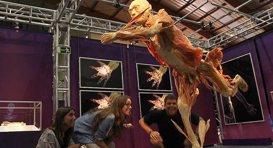 Una exposición científica desvela la anatomía humana | Andalucía ...