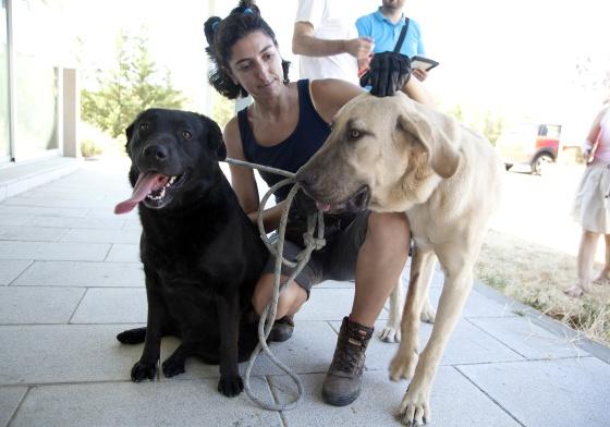 Centro Reto Madrid Recogida Muebles : Centro de acogida animales colmenar viejo cortes