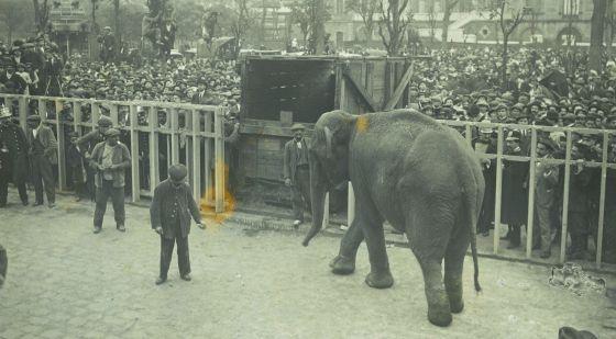 Resultat d'imatges de julia elefanta