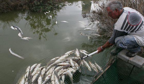 Ni los peces pueden con la sequ a comunidad valenciana for Estanque oxigeno