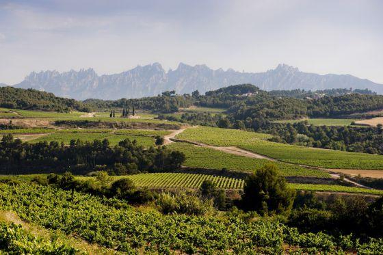 El vino se encomienda al turismo - EL PAÍS