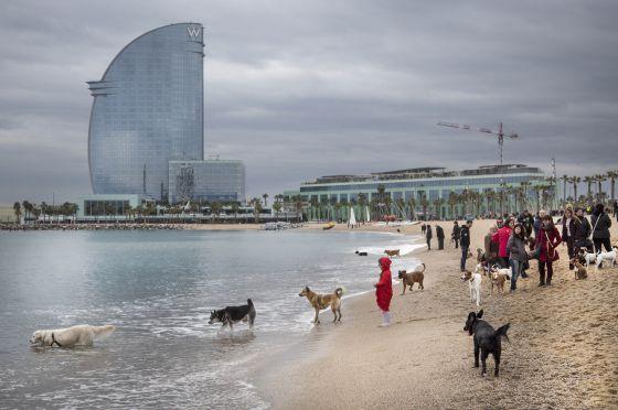 Recogida animales muertos en barcelona