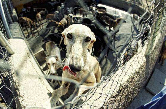 Recogida de animales abandonados madrid