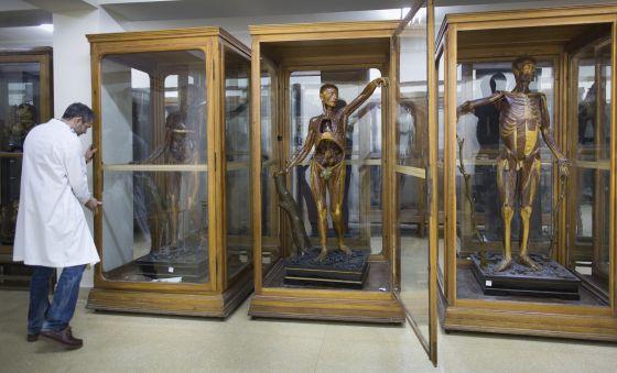 UCM: La Complutense abre sus museos secretos | Madrid | EL PAÍS