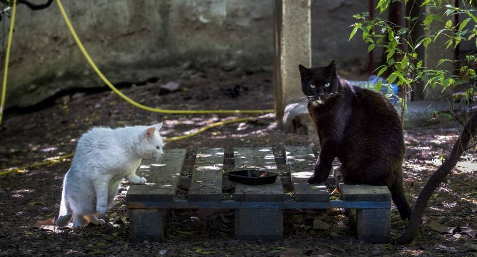 Feral cats in Spain: What to do about Spain's street cats