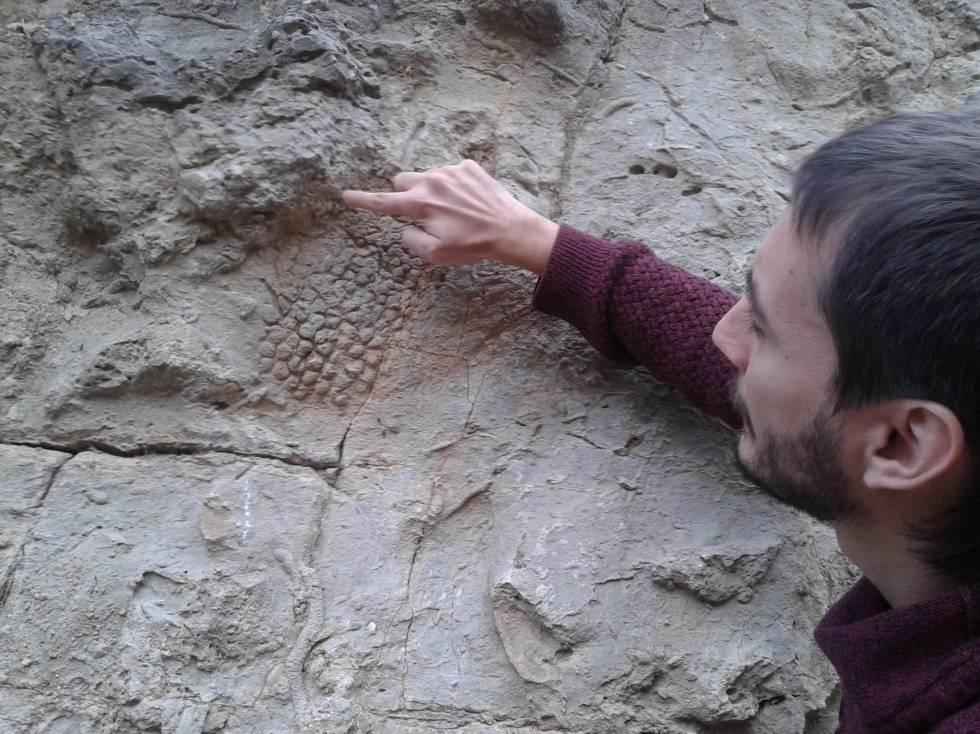 El dinosaure va deixar l'empremta de les seves escates | Ciència ...