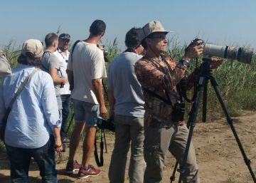 El pavo del Congo canta en el Delta del Ebro