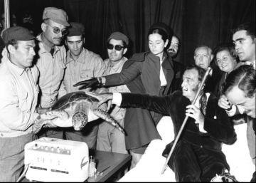 Salvador Dalí, de la payasada a la 'performance'