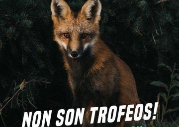 Los animalistas destapan la ubicación del campeonato del zorro que no revelaron la Xunta ni los cazadores