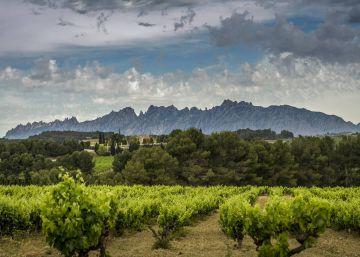 El vino catalán crece pero frena en el mercado español