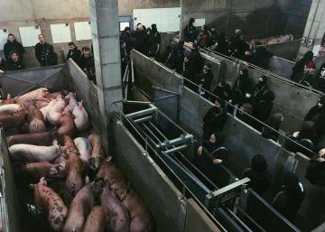 Los Mossos desalojan a un centenar de animalistas que habían ocupado un matadero en Girona