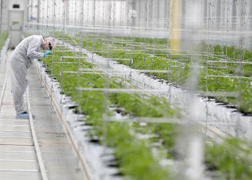 Los grandes fondos se desenganchan de las inversiones en cannabis