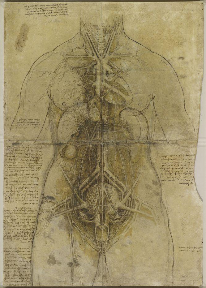 Fotos: El bisturí imaginario de Da Vinci | Cultura | EL PAÍS