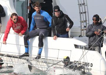 ¿Podrá Michael Phelps ganar a un tiburón?
