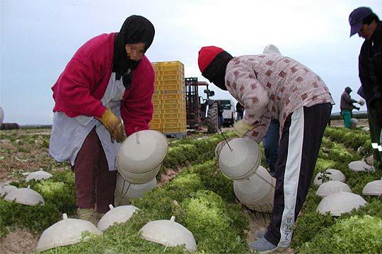 Mujeres inmigrantes trabajando en el campo edici n - Trabajo de jardinero en madrid ...