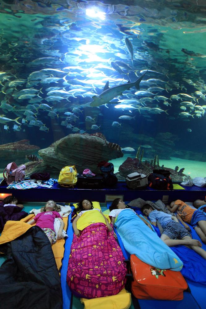 Ni os en el acuario l 39 oceanogr fic en valencia edici n for Acuario valencia precio