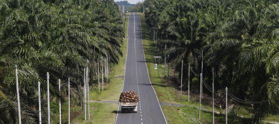 como afecta el aceite de palma al medio ambiente