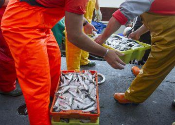 Cuatro jefes de policía detenidos en el puerto de Vigo implicados en una red de sobornos y pesca ilegal