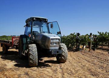 Agricultura aplaza su mediación en la 'guerra' del cava