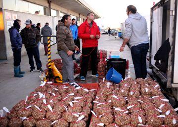 Desolación y barcos varados por el veto a la chirla en Huelva y Cádiz