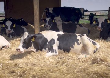 Una historia de 90.000 vacas felices