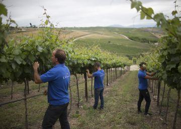 Un alto ejecutivo en el viñedo