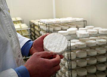 La interminable guerra del camembert en Francia