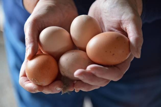 como congelar huevos crudos