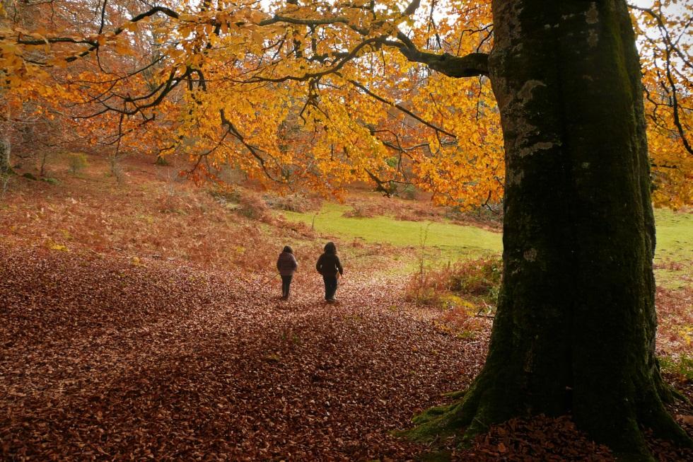 10 + 1 bosques españoles para el otoño que viene | Blog Viajero ...