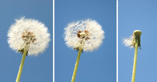 La fragilidad nos hace poderosos | Blog Laboratorio de felicidad | EL PAÍS
