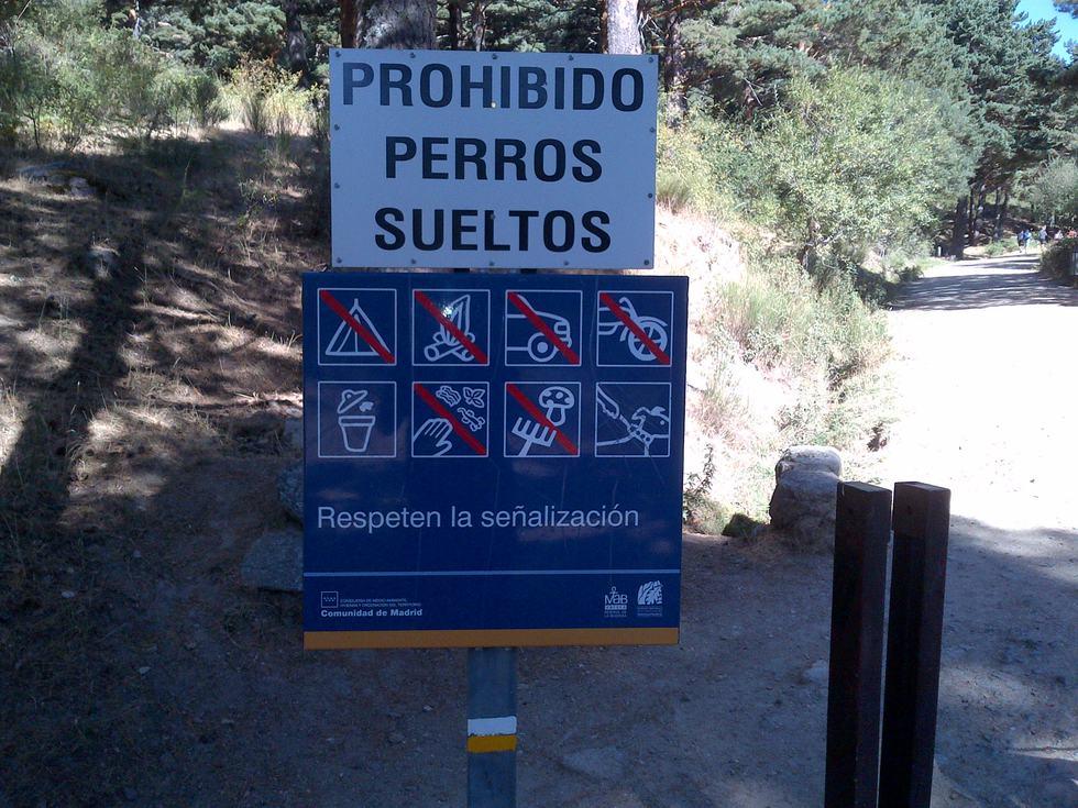 prohibido llevar perros al campo | blog animalesycia | el paÍs