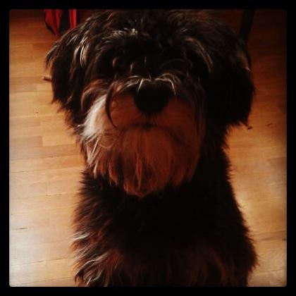 Qu le pasa a tu perro cuando te vas blog animalesycia el pa s - Cuando se puede banar a un cachorro ...