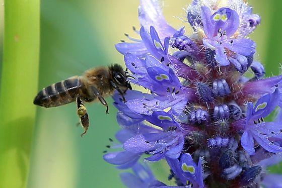 Resultado de imagen de abejas en flores