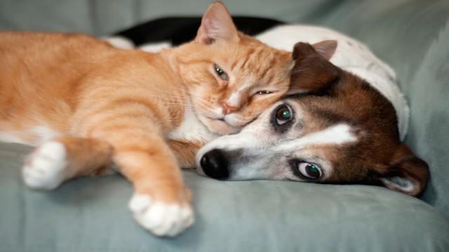 Perro o gato qu animal es m s barato de mantener for El sofa mas barato