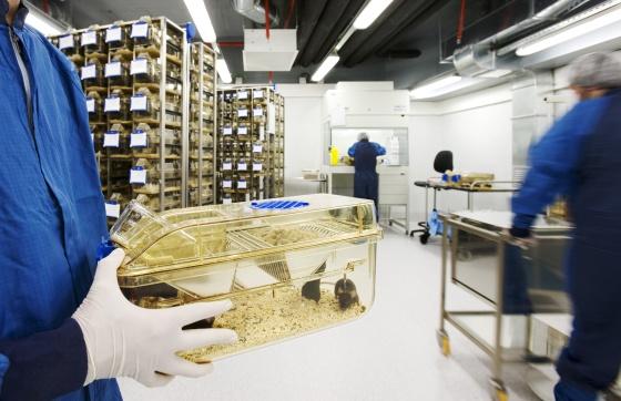 Los cient ficos espa oles defienden la experimentaci n con for Laboratorio con alloggi